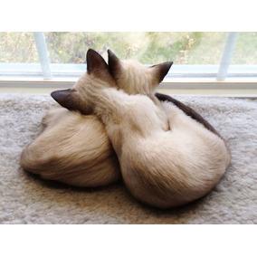 Fêmea Gato Siames Docil E Brincalhoes