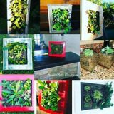Cuadros Vivos, Plantas Suculentas, Tunas, Mini Jardines Desd