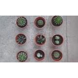 Cactus Y Suculentas De Varios Tipos En Maseteros Pequeños.