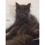 Spa De Gatos Como En Casa - Guarderia Felina