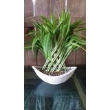 Bambu Da Sorte - Arranjo Sem Vaso