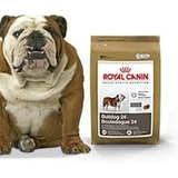Bulldog Royal Canin 12 Kg. Ver Despacho Sin Costo