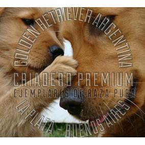 Golden Retriever Preciosos, Pureza 100% Criadero Premium.
