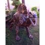 Locaçao Venda De Escultura Boneco Dinossauro Em Fibra