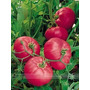 Semillas De Rose Pink Big Tomate