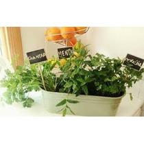 3 Plantas Aromaticas En Maceta Jardinera.envios San Martin!
