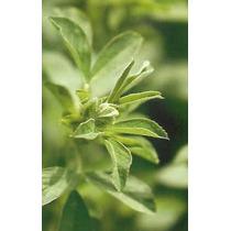 1 Kilo Semillas De Alfalfa Para Germinar (medicago Sativa)