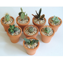 Recuerdos Bautizo, Plantas, Suculentas, Cactus Miniatura
