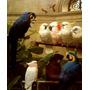 Arara-azul Papagaio Pássaros Espécies Pintor Marks Tela Repr