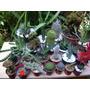 Cactus,crasas Y Suculentas En Maceta De 6cm