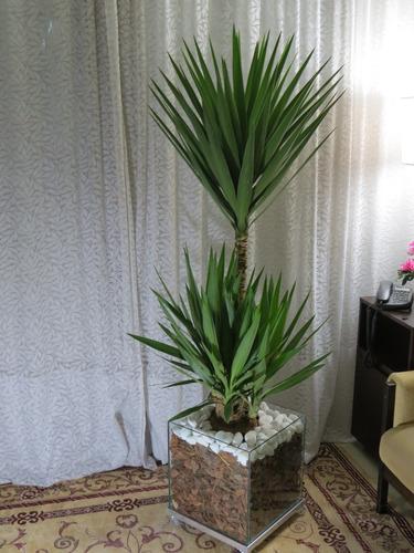Planta Para Escrit 243 Rio Yucca Cachepot De Vidro 35x35x35cm