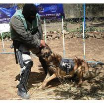 Perros Entrenados En Proteccion Familiar, Personal, K-9