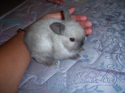 Conejos enanos dwarf los m s pekes varios colores 600 - Casas para conejos enanos ...