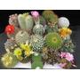 100 Sementes De Cactus 20 Tipos De Mini Cactos Sortidos