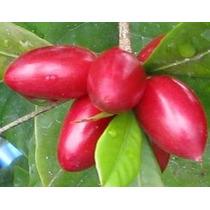 Milagro Bayas Frescas De Frutas - Activa Sour Sweet - 15 De