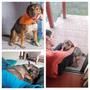 Cachorro Grande Mestizo De Pastor En Adopción