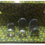 Cojinete De Bancada Daewoo Tico Damas Matiz 850cc. F8cv