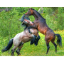 Aluguel Baias Para Cavalos R$ 250,00 - Santa Isabel - Sp
