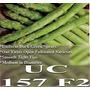 1 Lb Semilla Asparagus Officinalis, Esparrago Var. Uc 157 F2