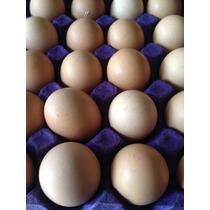Huevo De Rancho O Huevo Fertil Gallo Gallina O Saludable