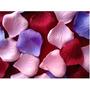 750 Pétalos Premium Tela Flores Eventos Decoración Souvenir