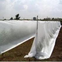 Agrivelo Tela Para Proteccion Agricola 17 Grs Uv Invernadero