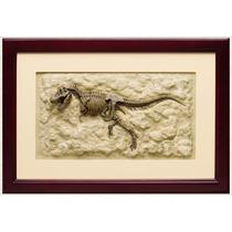 Dinosaurio Tiranosaurus Rex Esqueleto Enmarcado Fosil