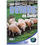 Criação De Ovinos De Corte Vol.1 Dvd