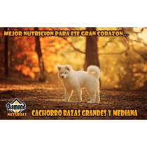 Croqueta Diamond Puppy Large Breed 18kg Envio Gratis Yucatan