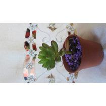Plantas De Varios Modelos Mini