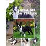 Boston Terrier Conocelo + Educacion Y Adiestramiento ¡¡
