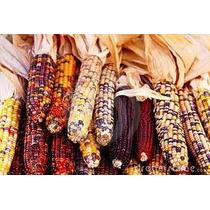 Maiz Indio O Pinto 6 Semillas Ornamental Cultivo Nmp Sdqro