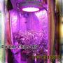 Ufo Led 300w Indoor Full Espectro, Doble Chip, Creci Y Flora