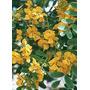 Tipas. Plantas, Árboles, Palmeras, Arbustos
