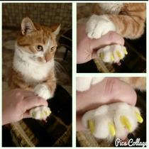 Protector De Uñas Para Gato Envío Incluido Por Mercado Envio