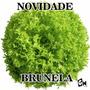 Alface Brunela Corcante 200 Sementes Peletizada Hidroponia