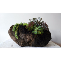 Arreglos Con Plantas, Macetas De Troncos, Piedras O Barro