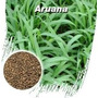 Semente De Capim Aruana - Sacos De 20 Kgs - Frete Gratis