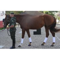 Farda Culote Calça Gandola Hipismo Camufl Exército Brasileir