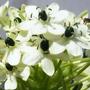 Últimas Novedades En Bulbos Exóticos: Listos Para Plantar!!