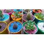 Mini Cactus Y Suculentas