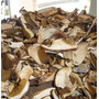 Hongos Bolletus Edulis (funghi Porcini) Chilenos X 1 Kilo
