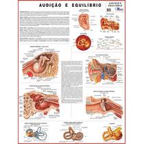 Mapa: Audição E Equilibrio - Medicina Anatomia Fisioterapia