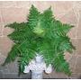 Planta Artificial - Helecho Hawai - Regalosdeco