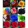 50 Sementes De Rosas ( 5 De Cada ) Exoticas 10 Cores Confira