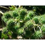 Óleo De Rícino(mamona)vegetal 100 % Puro - Quantidade 100 Ml
