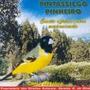 Pintassilgo Pinheirinho Cd Original Frete Gratis