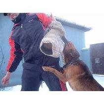 Para Todos Os Cães Cachorro, Adestramento De Cães Em 3 Dvds