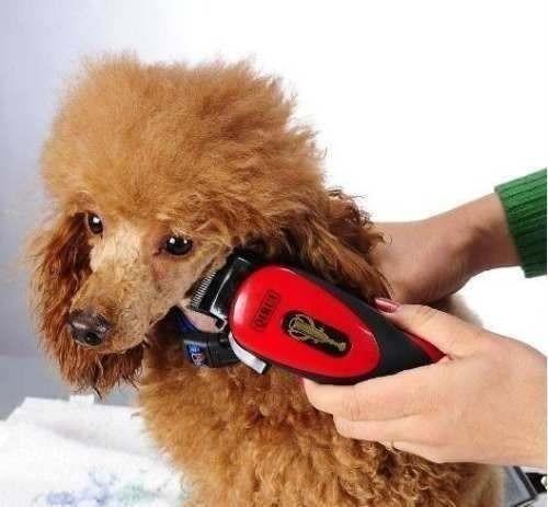 Videos de corte de pelo de poodle