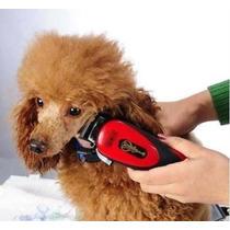 Kit Especial Para Cuidados De Cães De Pequeno E Médio Porte